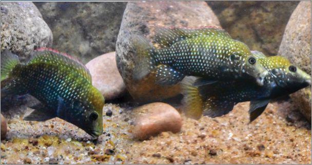 Ornamental Fish Industry Past Present And Future Creature Companions Magazine