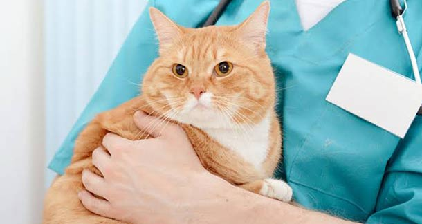 Cat Neutering And Its Importance