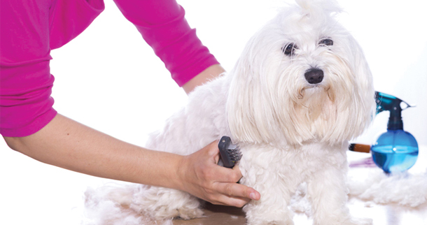 Pet Grooming Tips And Latest Trends