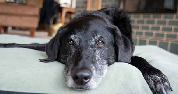 The Joys And Challenges Of Living With A Geriatric Pet