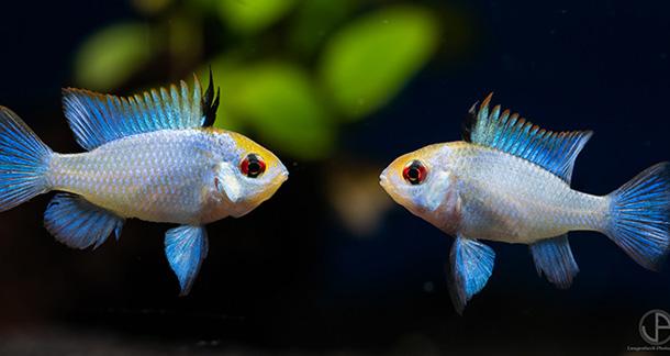 Aquarium Photography: Tips & Tricks