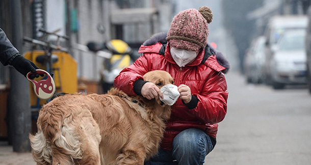 Safeguarding your Pets Against Air Pollution