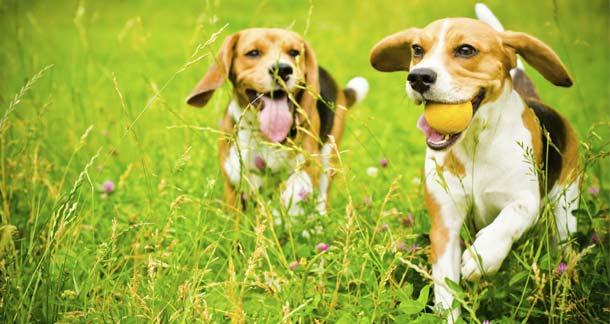 Keep Your Dog Safe From Fleas And Ticks With These 10 Prevention Tips