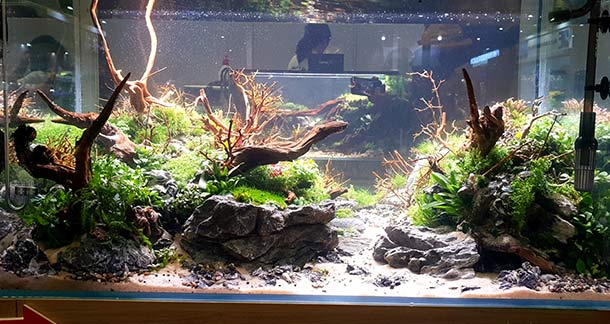 India Represented In CIPS Live Aquascaping Contest 2019
