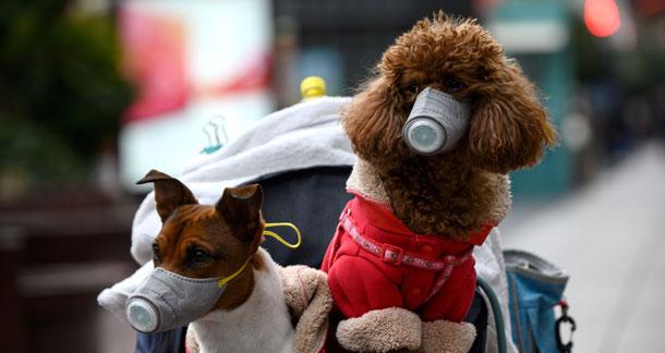 Pet Care during Corona Scare