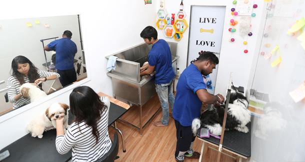 Pet Care & Grooming Under Lockdown