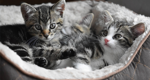Bringing Home A Kitten: Things You Need to Know