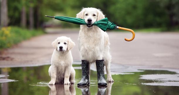 Rainy Season Puppy Care Tips