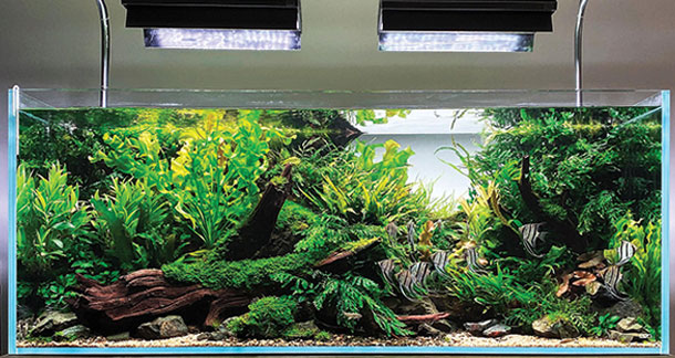Things You Need To Know While Setting Up Your Plantation Aquarium