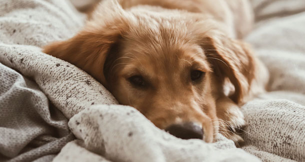 7 Essential Tips To Take Care Of Your Pet In Winter