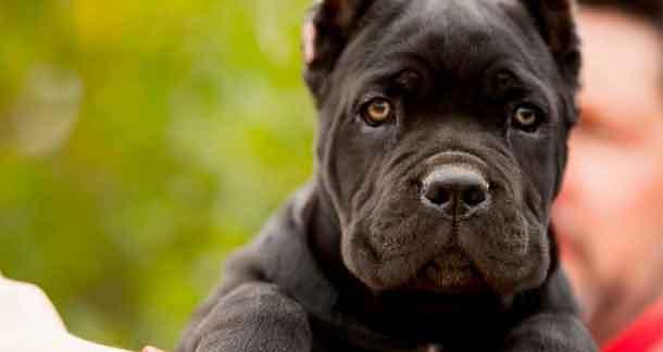 My Pet My Story!