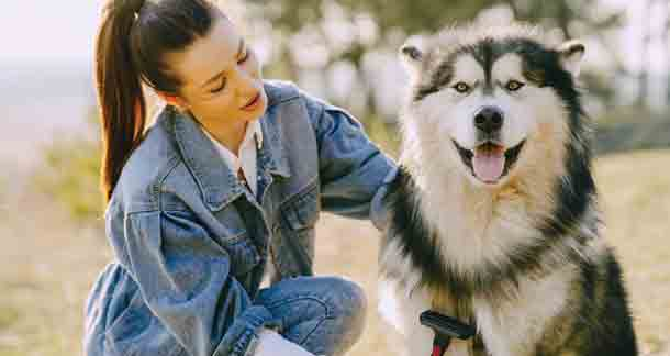 The Grooming ABCs: Siberian Husky Edition
