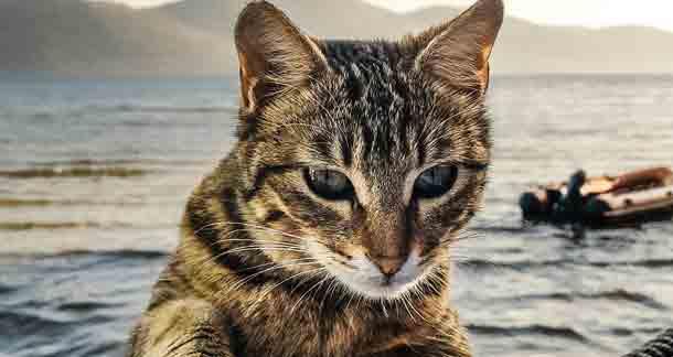 Self-Grooming Behaviour In Cats