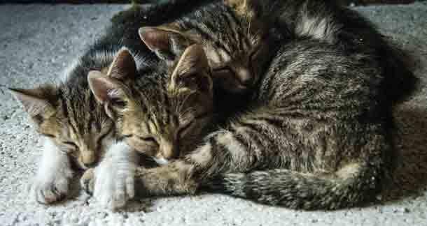 Kitten Diaries: A Sneek Peek Into Those Early Days