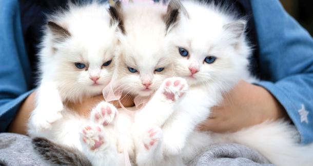 Handin Paw – Making Senseofthe World With Kitten