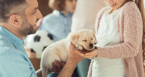 Presence of Internal Parasites in Puppy