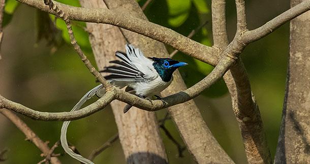 Birdwatching : A Wonderful Hobby