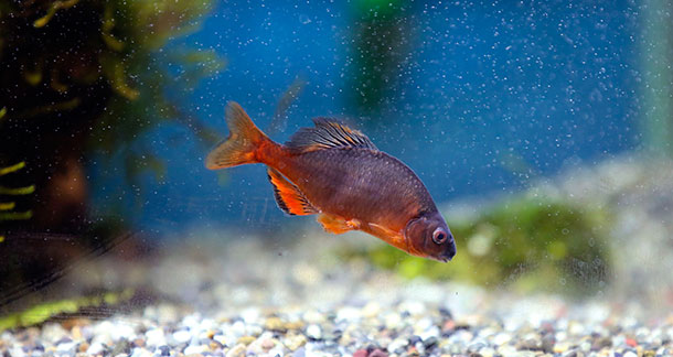 Why Fish Die after a Water Change and How to Prevent It