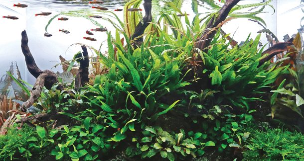 7 Easy-to-Care Aquarium Plants for Beginners